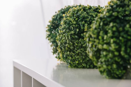 close up view of green plants arranged on white surface in room