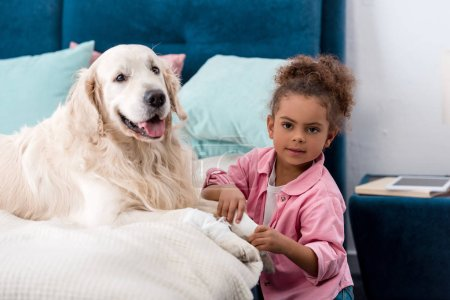 Curly african american child sitting near bandages paw retriever