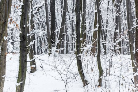 Photo pour Arbres et buissons enneigés dans le parc d'hiver - image libre de droit