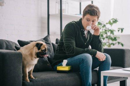 Photo pour Homme allergique au chien tenant des tissus près du nez et assis sur le canapé avec carlin - image libre de droit