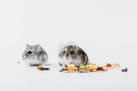 Photo for Cute furry hamsters near dry pet food on grey background with copy space - Royalty Free Image