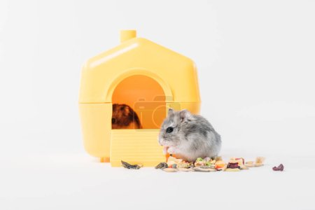 Photo for Funny fluffy hamster near pet house with one hamster inside on grey - Royalty Free Image