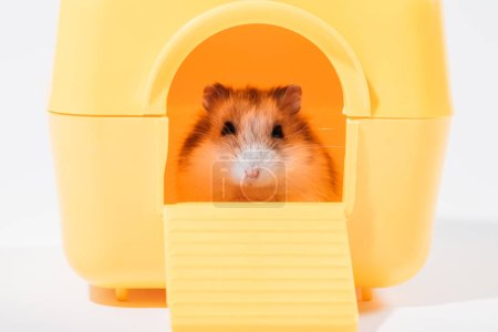 Photo for Adorable funny hamster sitting in yellow pet house and looking at camera on grey - Royalty Free Image