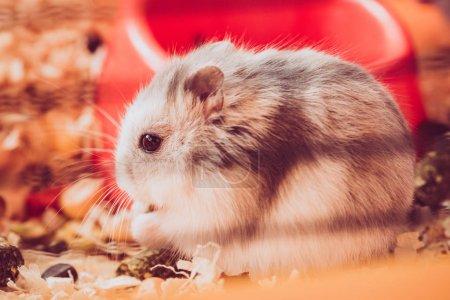 Photo pour Focus sélectif de hamster moelleux adorable assis dans les dépôts en bois - image libre de droit