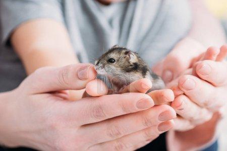 foyer sélectif de la mère et du fils avec hamster adorable dans les mains