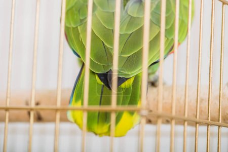 Photo for Selective focus of bright green and yellow parrot tail in bird cage - Royalty Free Image