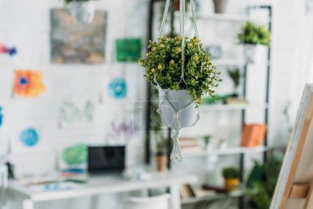 Foto de Enfoque selectivo del enfoque selectivo de la flor verde en maceta colgante en la habitación espaciosa - Imagen libre de derechos