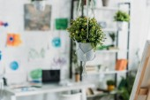 """Постер, картина, фотообои """"селективное внимание селективного фокуса зеленого висящего цветка в горшках в просторной комнате"""""""