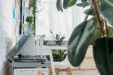 Photo pour Foyer sélectif du lecteur de disque avec le disque de vinyle dans la pièce avec des usines vertes - image libre de droit