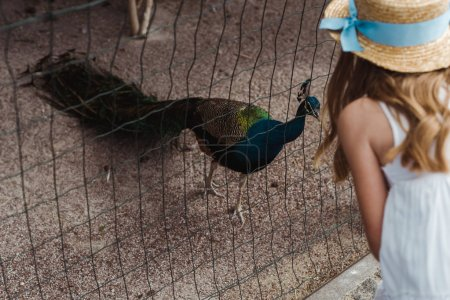 Photo for Cropped view of kid in straw hat standing near peacock in cage - Royalty Free Image