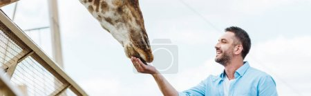 panoramic shot of cheerful man feeding giraffe in zoo