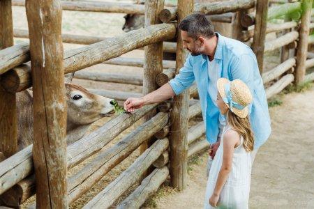 Photo pour Bel homme nourrir taureau avec des feuilles vertes près de l'enfant en chapeau de paille - image libre de droit