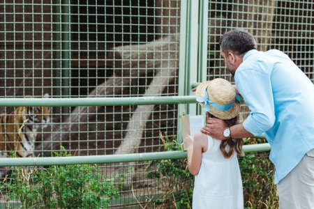 kid and dad standing in zoo and looking at tiger in cage