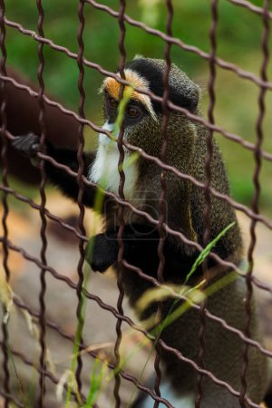 Photo for Selective focus of lemur climbing on cage near grass in zoo - Royalty Free Image