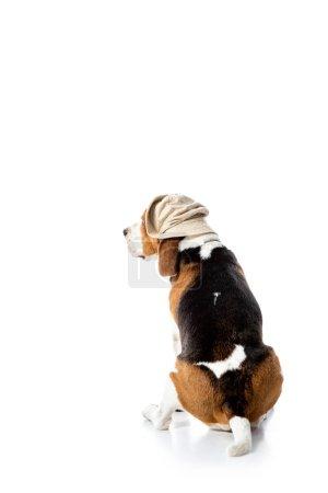 Photo pour Crabot mignon de beagle dans le chapeau d'explorateur se reposant sur le blanc - image libre de droit