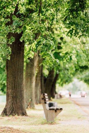 Foto de Enfoque selectivo de banco de madera en el parque cerca de muchos árboles grandes - Imagen libre de derechos