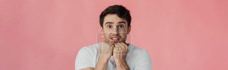 Photo pour Plan panoramique de jeune homme effrayé tenant les poings vers le haut et regardant la caméra isolée sur rose - image libre de droit