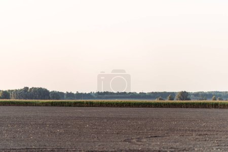 Photo for Ground near corn field and green trees against sky - Royalty Free Image