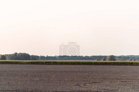sol près champ de maïs et arbres verts contre le ciel