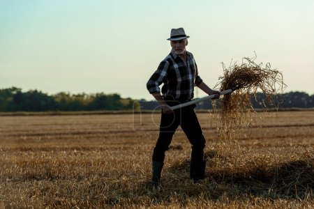 Photo for Handsome senior man in straw hat holding rake with hay in wheat field - Royalty Free Image