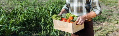 Photo for Panoramic shot of senior farmer holding wooden box with vegetables near corn field - Royalty Free Image
