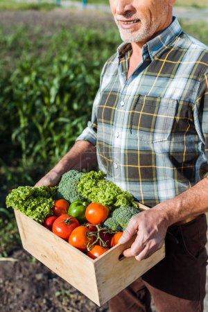 vue recadrée d'un fermier heureux tenant une boîte en bois avec des légumes près du champ de maïs