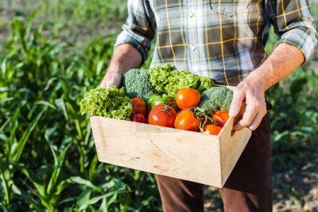 Ausgeschnittene Ansicht eines älteren Mannes, der eine Schachtel mit Gemüse hält