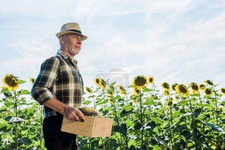 bärtiger Senior hält Schachtel mit Sonnenblumen in der Hand