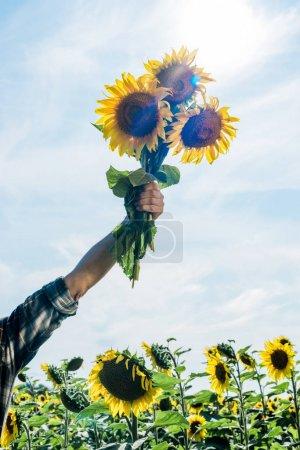 Photo pour Vue recadrée de l'exploitation agricole tournesols contre ciel - image libre de droit