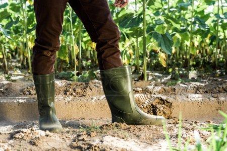 Foto de Vista recortada del agricultor de pie en el suelo cerca de plantas verdes - Imagen libre de derechos