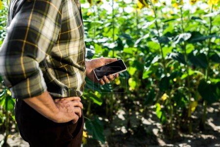 Photo for Cropped view of farmer standing with hand on hip and holding smartphone with blank screen - Royalty Free Image