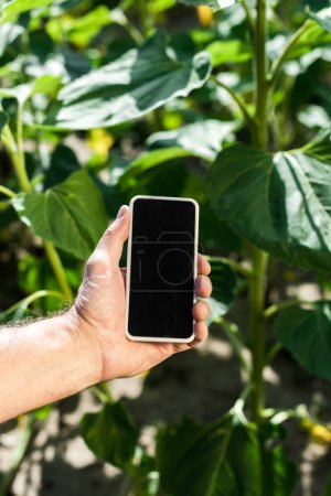 Photo for Cropped view of farmer holding smartphone with blank screen - Royalty Free Image