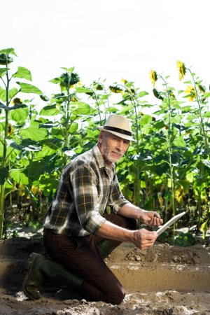 Photo for Cheerful self-employed farmer using digital tablet near field with sunflowers - Royalty Free Image