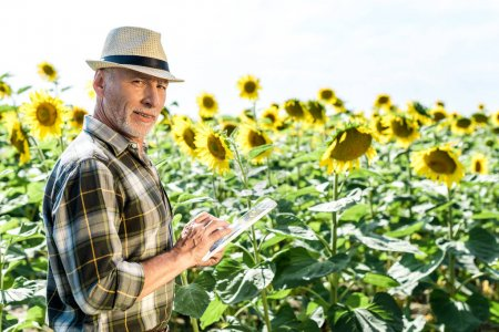 happy self-employed  farmer using digital tablet near field with sunflowers