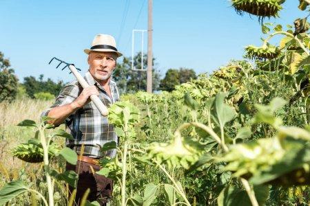 Selektiver Fokus selbständiger Seniorchef hält Regal in der Nähe der grünen Wiese
