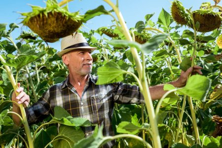 Photo for Selective focus of happy man in straw hat near sunflowers - Royalty Free Image