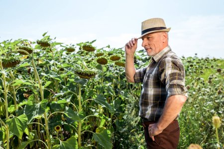 happy farmer in straw hat standing with hand on hip near blooming sunflowers