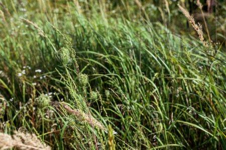 Foto de Enfoque selectivo de hierba fresca verde en el campo - Imagen libre de derechos