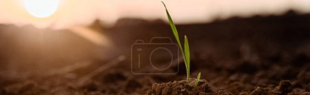Photo for Panoramic shot of small green plant with leaves - Royalty Free Image