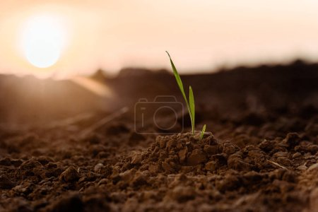Photo for Selective focus of sunlight on small green plant with leaves on ground - Royalty Free Image