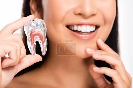 Photo pour Vue recadrée de la femme souriante tenant modèle de dent isolé sur blanc - image libre de droit