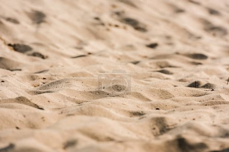 selective focus of wavy and golden sand in desert