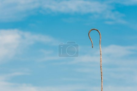 Photo for Wooden cane against blue sky with white clouds and copy space - Royalty Free Image