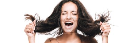 Photo for Panoramic shot of brunette beautiful woman with closed eyes screaming and holding curly hair isolated on white - Royalty Free Image