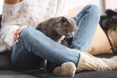 Photo pour Vue partielle de la femme avec chat gris assis sur le canapé - image libre de droit