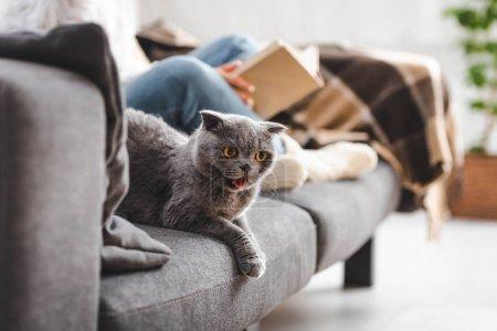 Photo pour Focus sélectif de chat gris scottish plié sur canapé avec livre de fille - image libre de droit