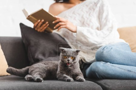 cropped view of girl reading book on sofa with scottish fold cat