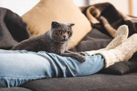 Photo pour Mignon félin pliant couché sur les pattes de la femelle sur canapé - image libre de droit