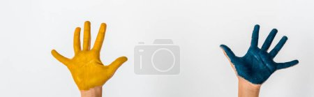 Photo for Panoramic shot of kid with blue and yellow paint on hands isolated on white - Royalty Free Image