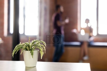 Photo for Selective focus of green plant in flowerpot near businesspeople - Royalty Free Image